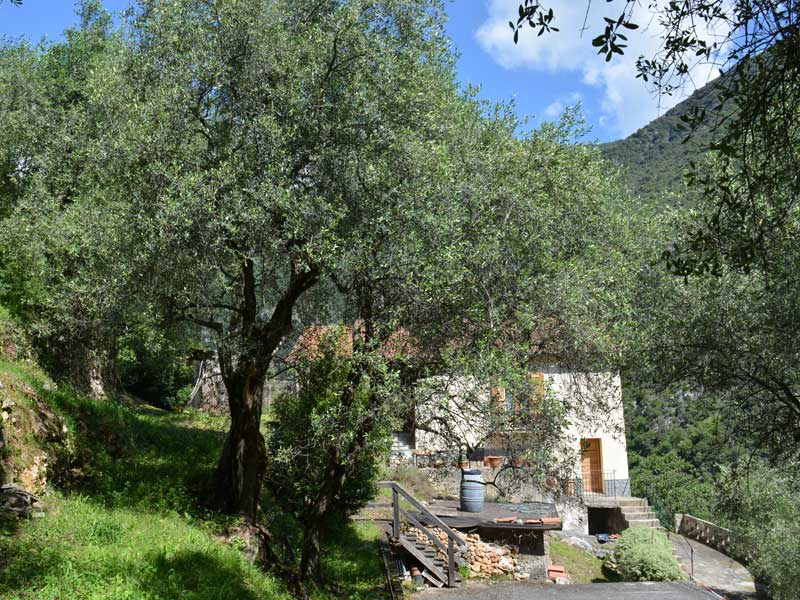 gite-location-meublee-les-oliviers-galery